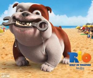 Luiz, a bulldog puzzle