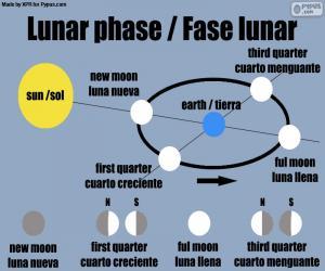Lunar phase puzzle