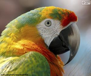 Macaw head puzzle