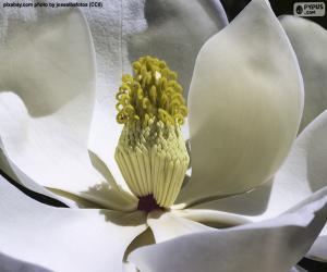 Magnolia Flower puzzle