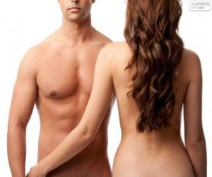 Male torso and female back puzzle