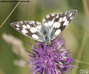 Marbled white Butterfly puzzle