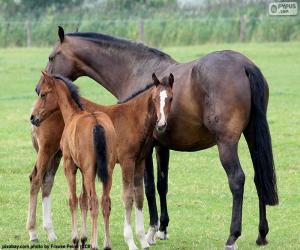 Mare with two foals puzzle