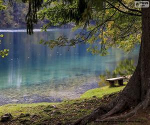 Meditation on the lake puzzle