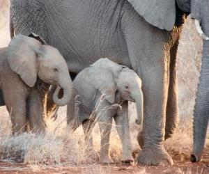 Mom controlling the little elephant puzzle