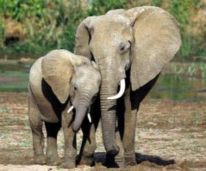 Mom controlling the little elephant with the help of her trunk puzzle