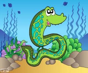 Moray eel puzzle