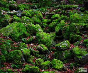 Moss-covered stones puzzle