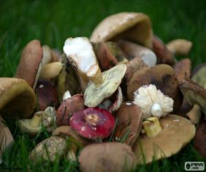 Mushrooms of various types puzzle