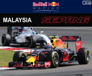M.Verstappen, Malaysian GP 2016 puzzle