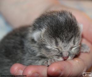 Newborn cat puzzle