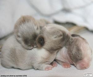 Newborn rabbits puzzle