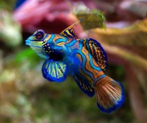 Nice tropical fish puzzle
