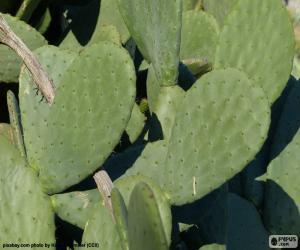 Opuntia ficus-indica or Nopal puzzle