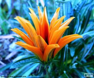 Orange Exotic Flower puzzle