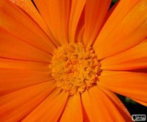 Orange flower puzzle