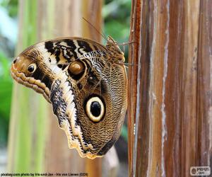 Owl Butterfly puzzle
