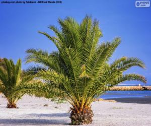 Palm trees on the beach puzzle