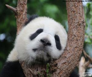 Panda sleeping puzzle