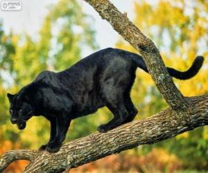 Panther black on a branch of a tree puzzle