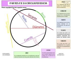 Parts of the circumference (Spanish) puzzle