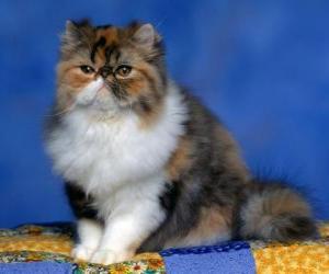 Persian Kitten puzzle