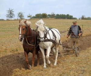Plowing with horses Paves puzzle