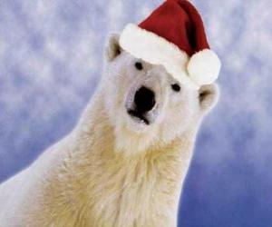 Polar bear with Santa Claus hat puzzle