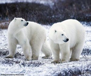 Polar bears puzzle