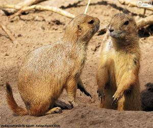 Prairie dogs puzzle