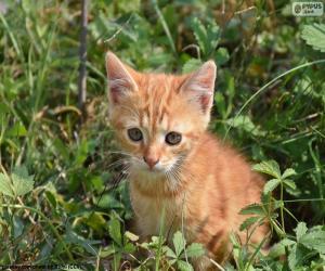 Precious kitten puzzle