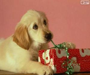 Puppy playing with a gift ribbon puzzle