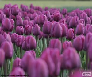 Purple tulips puzzle