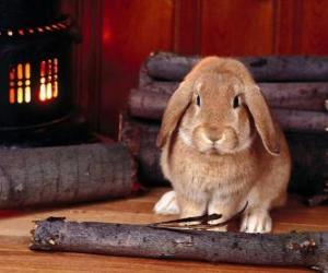 Rabbit beside the fire puzzle