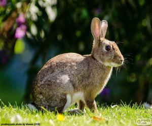 Rabbit European puzzle