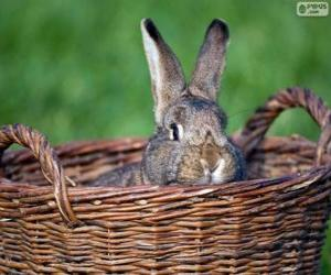 Rabbit in a wicker basket puzzle