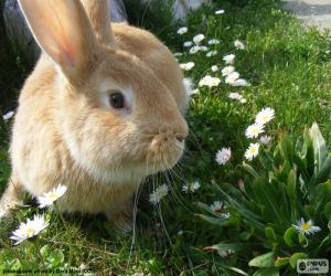 Rabbit in spring puzzle