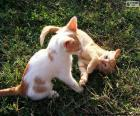 Kittens playing