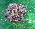 Picking up fallen leaves