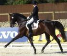 Horse and rider performing a dressage exercise