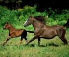 Horse and foal troting by the prairie