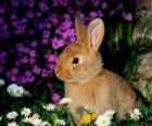 Rabbit among flowers