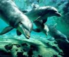 Group of dolphins swimming in the sea