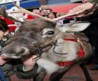 Head of Santa Claus's reindeer