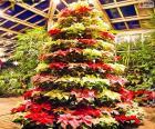 Christmas tree made from poinsettias