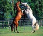 Two prancing horses