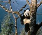 Panda on a tree