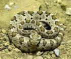 Coiled snake
