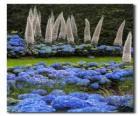 Hydrangeas and exotic flowers