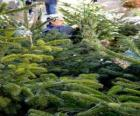 Street market of Christmas trees